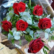 Traditional 6  Red Rose Bouquet